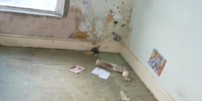 waste-removed-pen-y-fai-17D8EF7A17-4463-E688-5337-9915F48428B7.jpg
